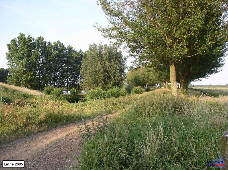 linne-20050718002