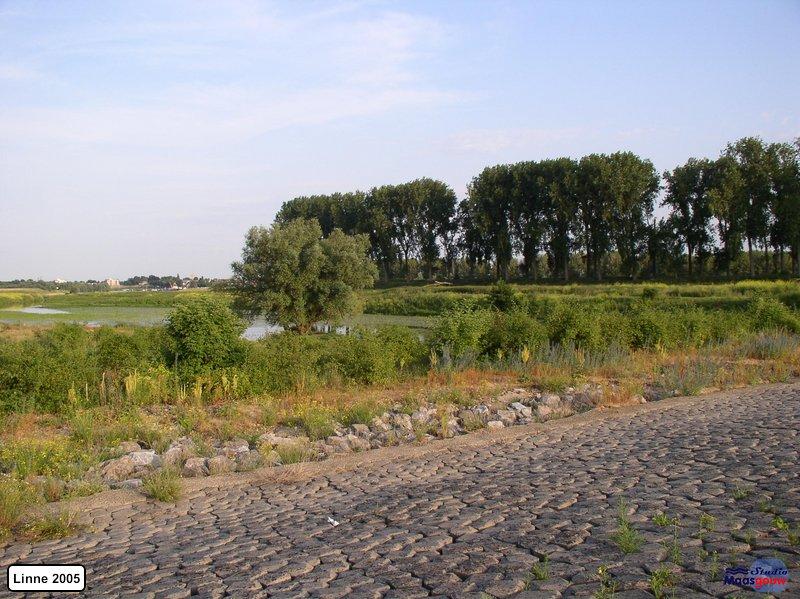 linne-20050718019