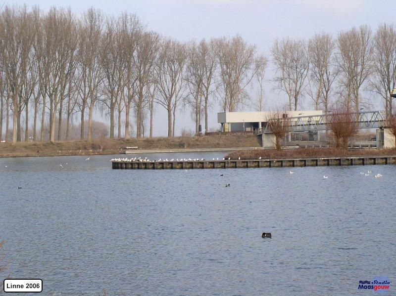 linne-200601015