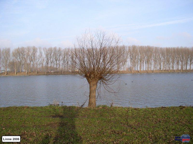 linne-200601018