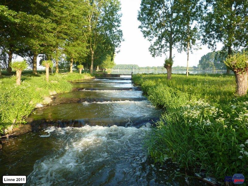 linne-20110505005