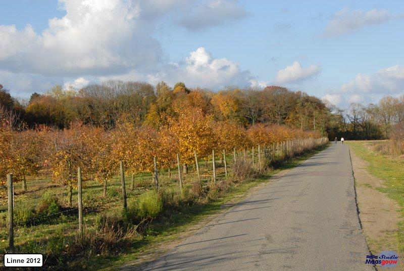 linne-2012111105