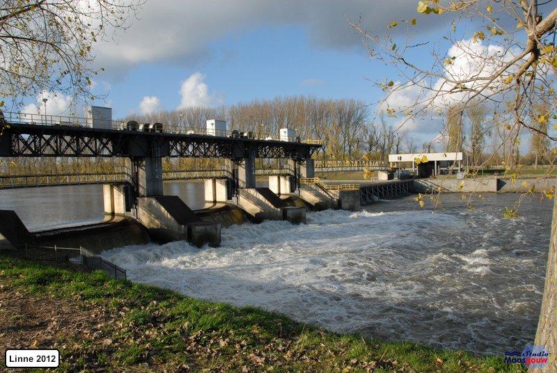 linne-2012111123