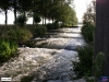 linne-20050718004