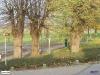 linne-20050928033