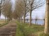 linne-200601012