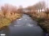 linne-200601033