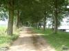 linne-200608012