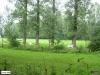 linne-200608021
