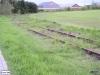 linne-20080501015