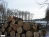 linne-20120205001