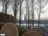 linne-20120205003