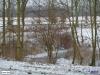 linne-20120205005
