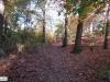 linne-2012111101