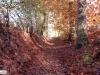 linne-2012111102