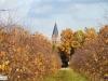 linne-2012111104