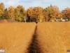 linne-2012111106