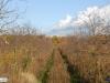 linne-2012111107