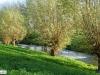 linne-2012111119