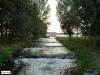 linne-2013090310