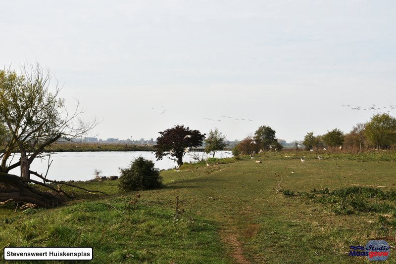 stevensweert-huiskensplas-20181020053