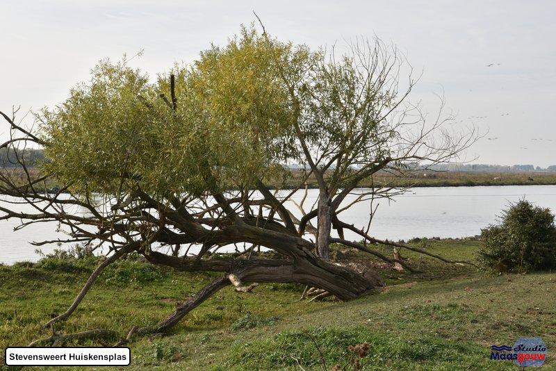 stevensweert-huiskensplas-20181020054
