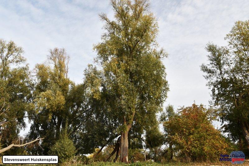 stevensweert-huiskensplas-20181020081