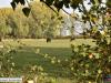 stevensweert-huiskensplas-20181020101