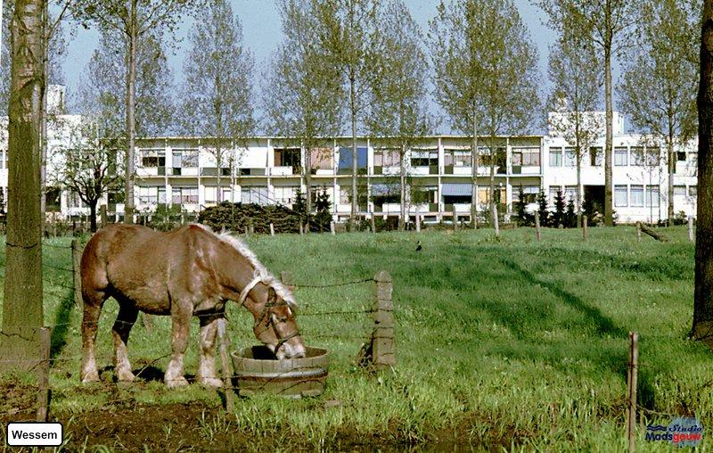 Wessem 1962-09b19